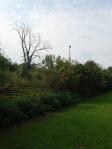 Überwucherte Tribünen am WAC-Platz. ©bundesligainwien.at